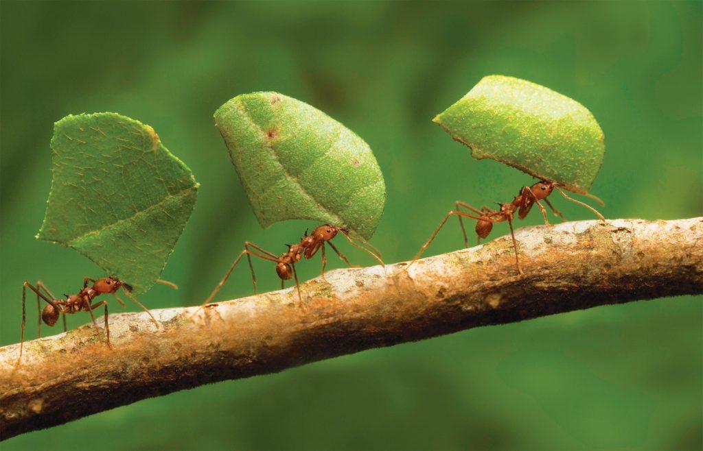 Ant Dream Interpretation