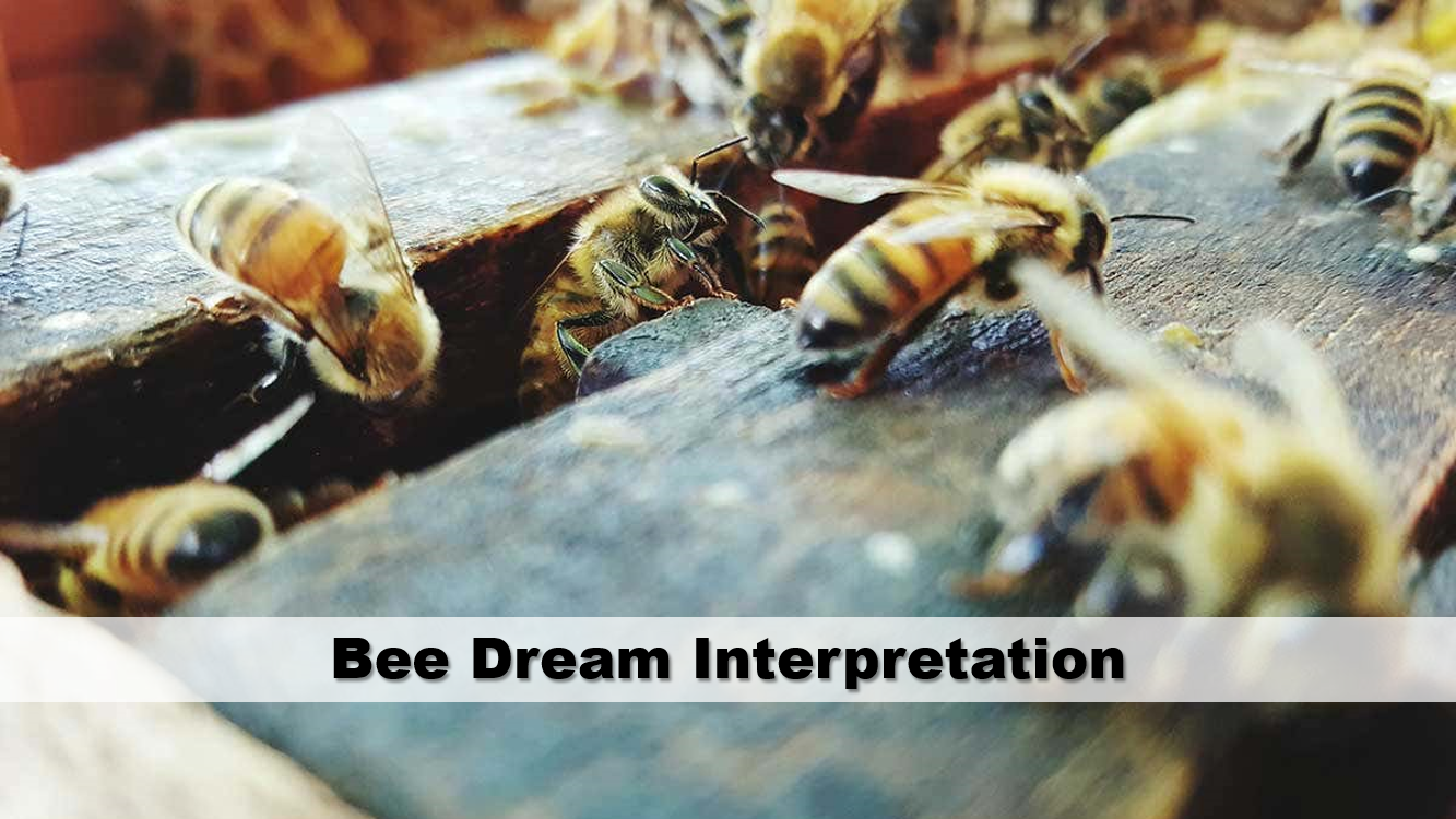 Bee Dream Interpretation