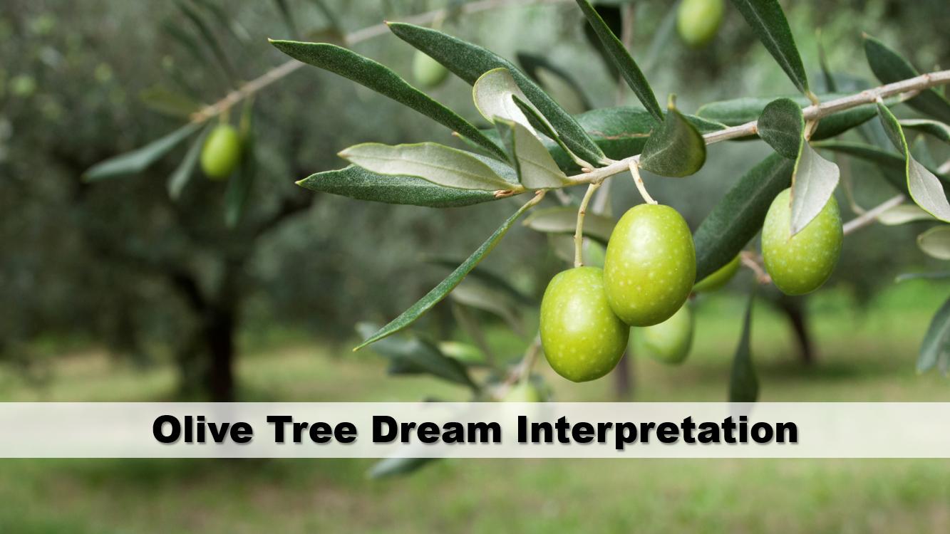 Olive Tree Dream Interpretation