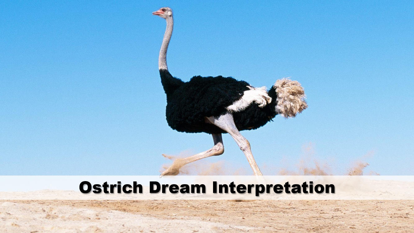 Ostrich Dream Interpretation