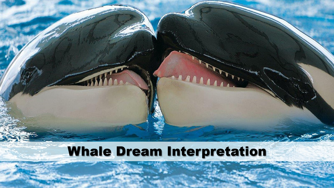 Whale Dream Interpretation