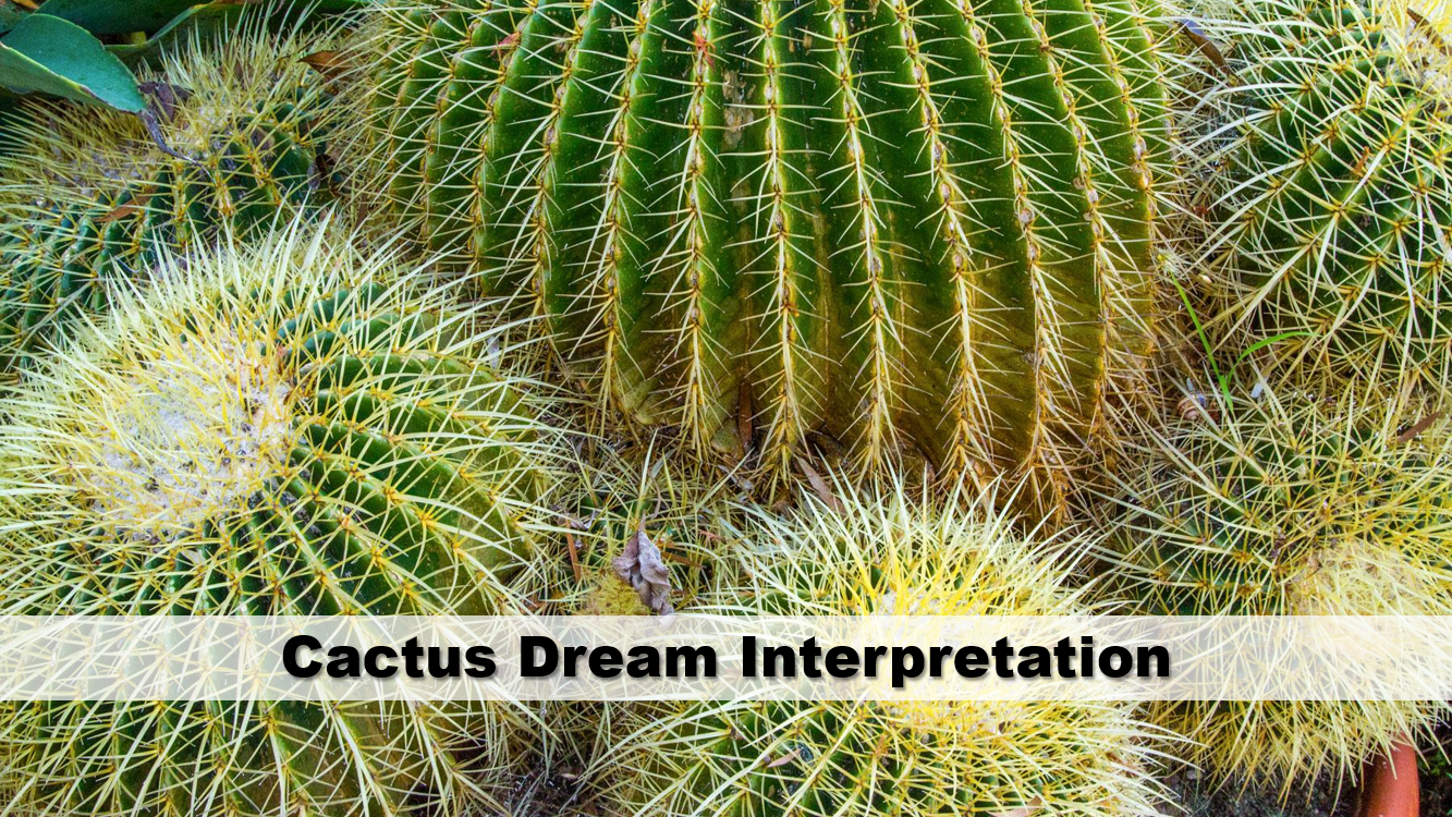 Cactus Dream Interpretation