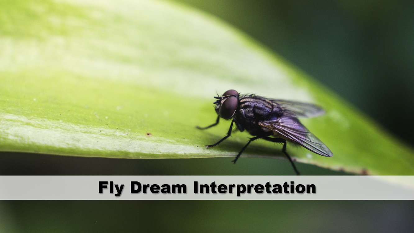 Fly Dream Interpretation