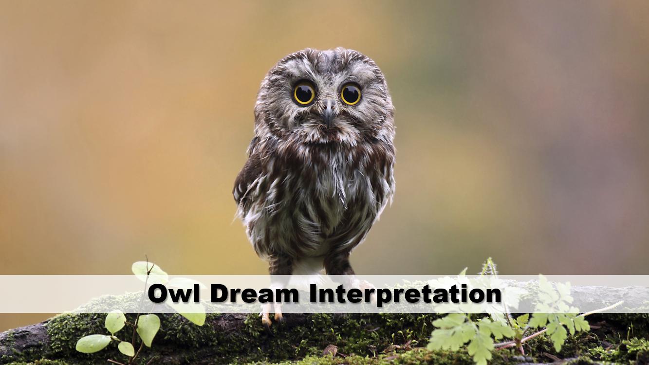 Owl Dream Interpretation