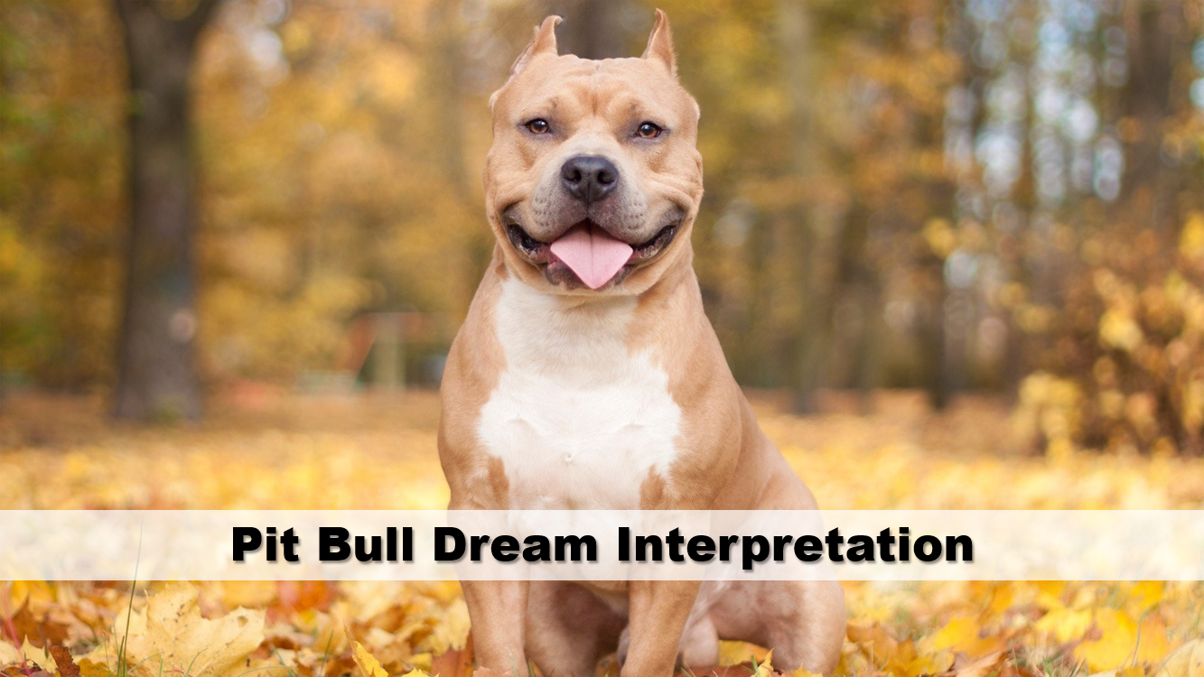 Pit Bull Dream Interpretation