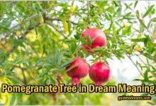 Pomegranate Tree in Dream Meaning
