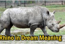 Rhino in Dream Meaning