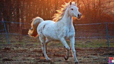 Horse Dirt Dream Interpretation